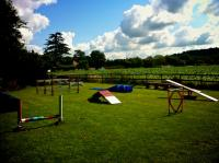 Agility club Summer 2012 - Marlow
